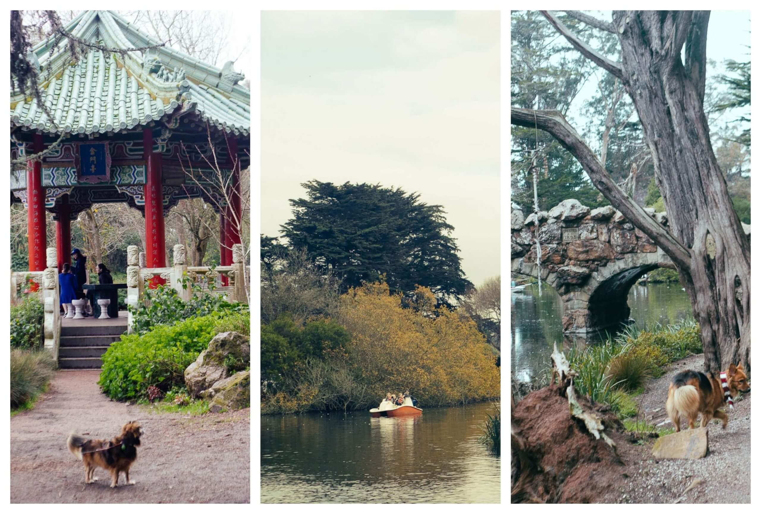 Strawberry Hill in Golden Gate Park